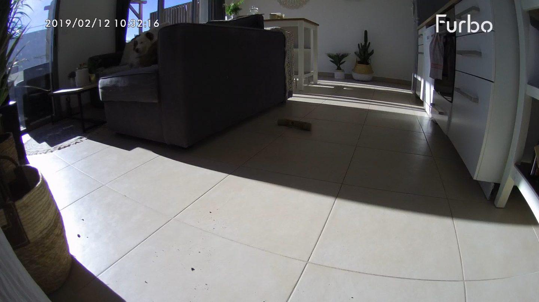 Furbo-caméra-chien-animaux-surveiller-parler-croquettes-canapé